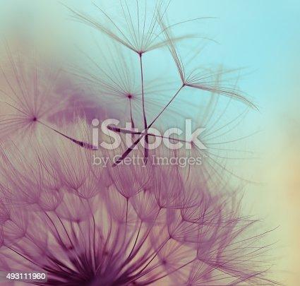istock Macro dandelion seed 493111960