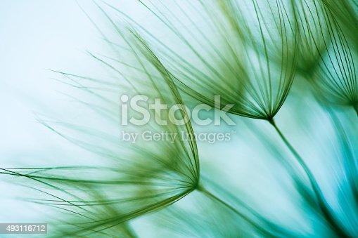 istock Macro dandelion seed 493116712
