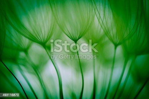 istock Macro dandelion seed 493116870