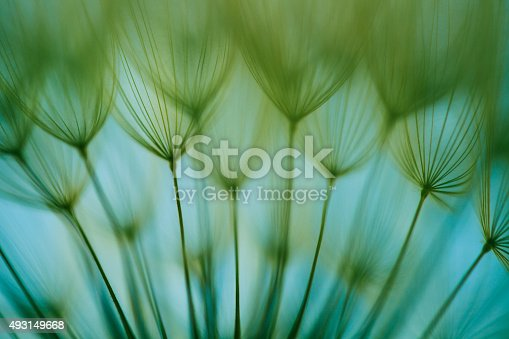 640082034istockphoto Macro dandelion seed 493149668