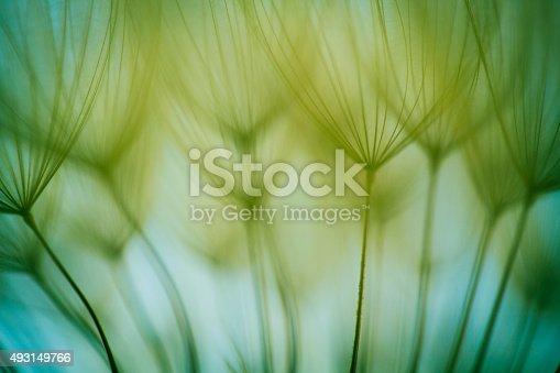 istock Macro dandelion seed 493149766