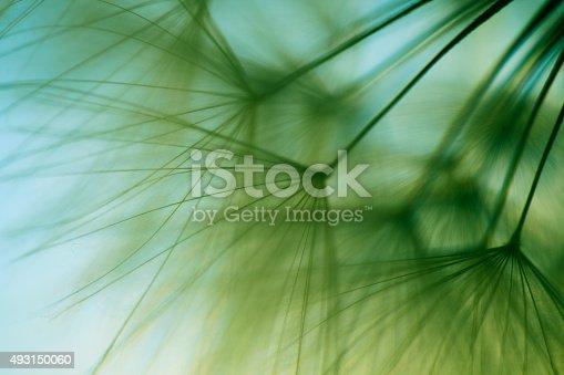 istock Macro dandelion seed 493150060