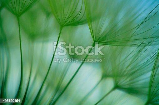 istock Macro dandelion seed 493150154