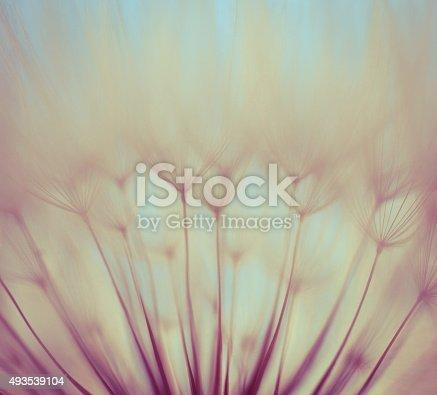 istock Macro dandelion seed 493539104