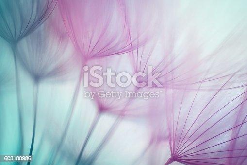 istock Macro dandelion seed 603180986