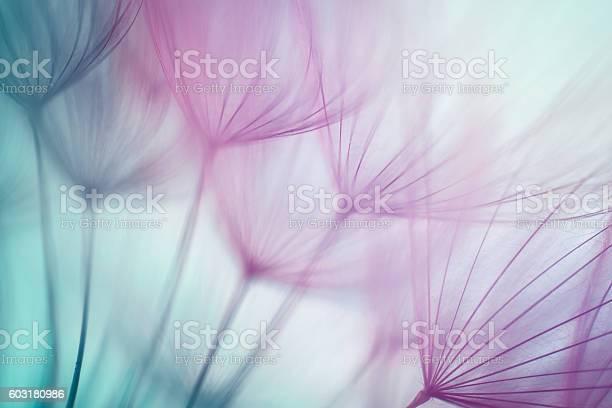Macro dandelion seed picture id603180986?b=1&k=6&m=603180986&s=612x612&h=osewlzm1zwscgsl8ekcar7dvkimbqjrznbddepphmnm=