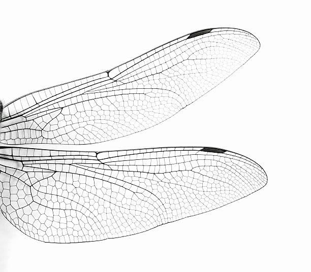 Macro dragonfly wings picture id170091207?b=1&k=6&m=170091207&s=612x612&w=0&h=dowpis92bcptdyshjsgxjmrneiak683e9i czkfpzuq=