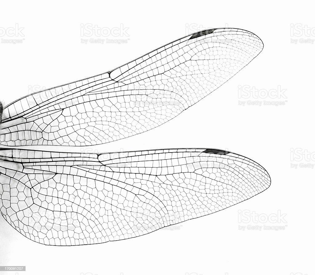 Macro Dragonfly asas - foto de acervo