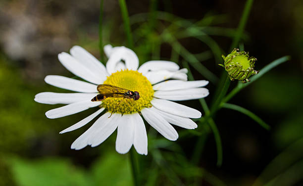 Macro flower and insect stock photo