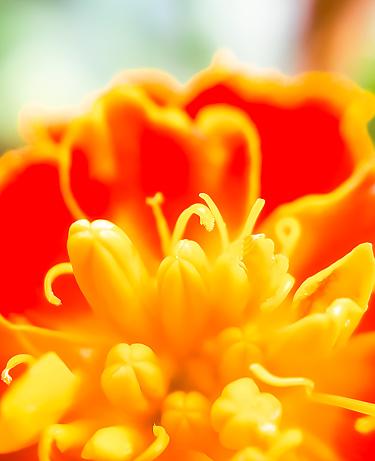 Makro Blomma Bloosom-foton och fler bilder på Blomkorg - Blomdel