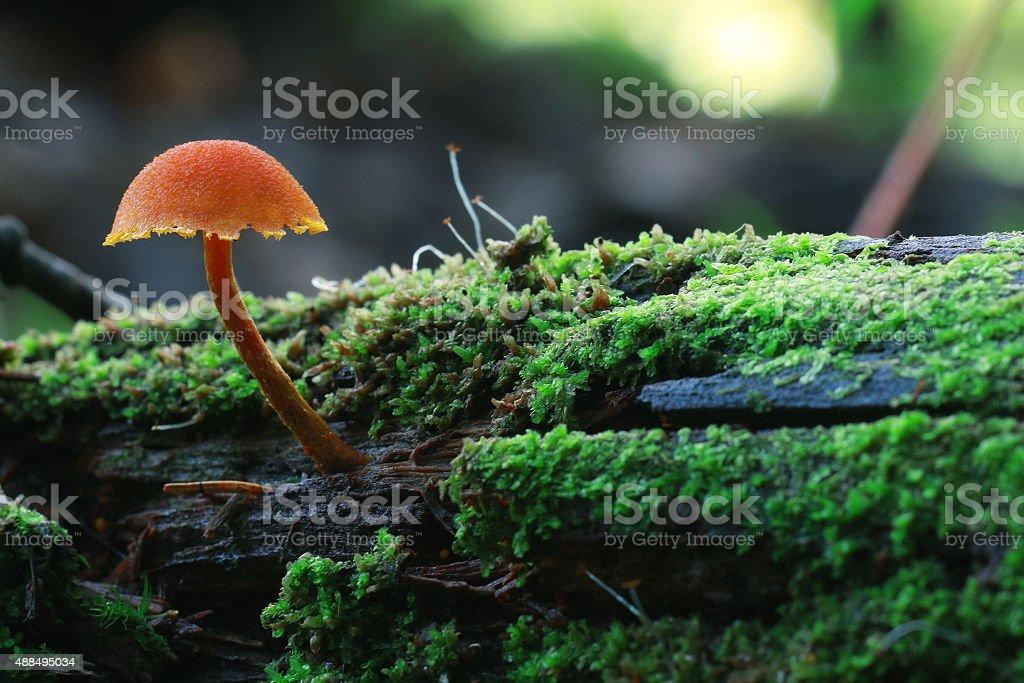 macro fungus mushroom naturally in wood stock photo