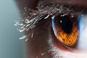 マクロ人間の目