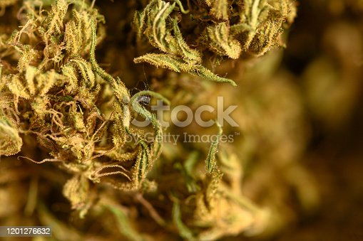 Extreme close up of legal cannabis.