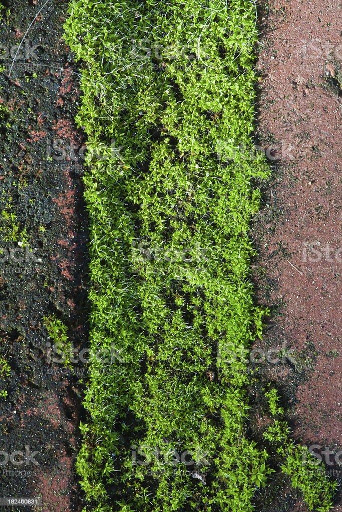 Macro de Moss e tijolos de imagem foto royalty-free