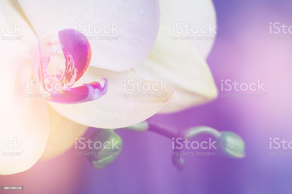 Macro image of orchid Light toning royalty-free stock photo