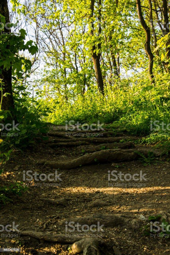 森の地面のマクロ画像。前景と根の部分に乾燥したブナの葉 ロイヤリティフリーストックフォト