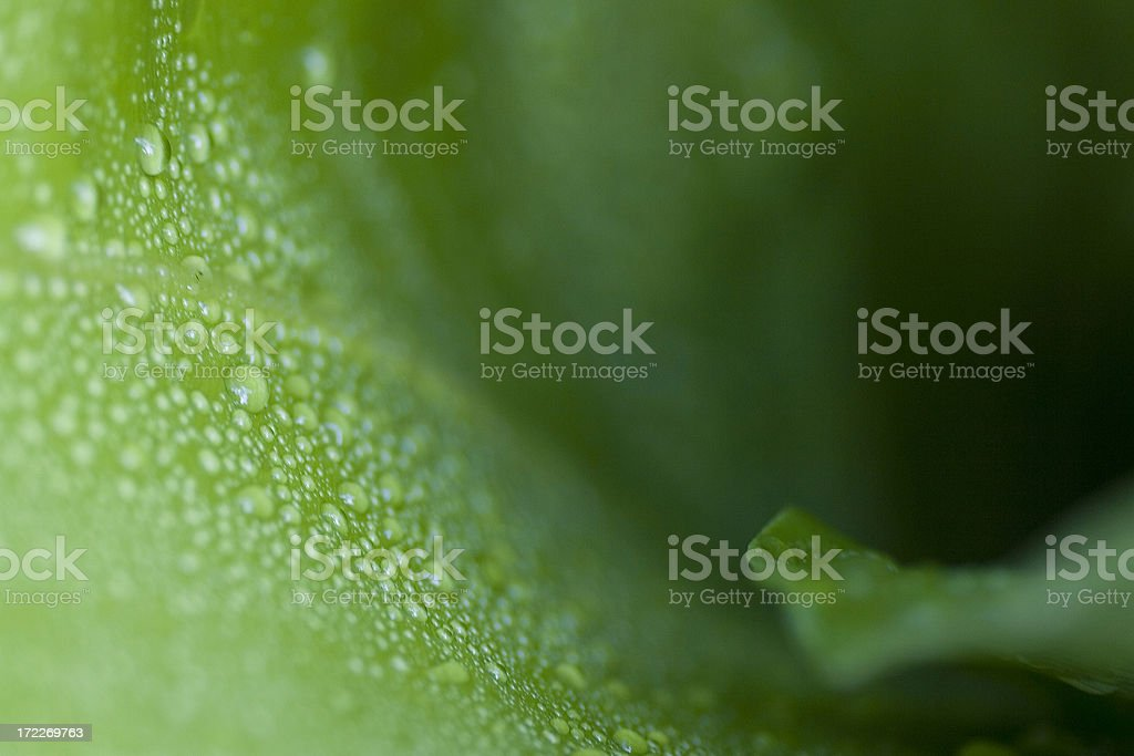 Macro leaf after rain royalty-free stock photo
