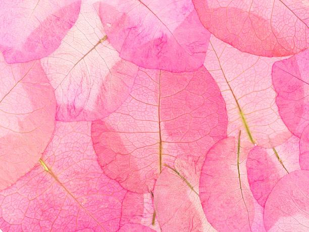 macro leaves background stock photo