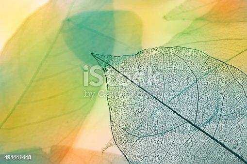 1155045999 istock photo Macro leaves 494441448
