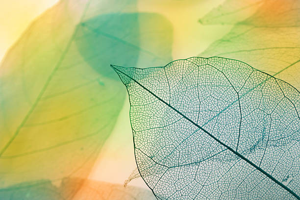 Macro feuilles - Photo