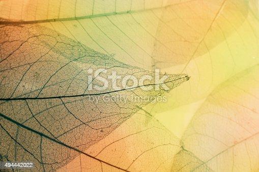 1155045999 istock photo Macro leaves 494442022