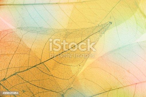 istock Macro leaves 499695984