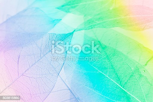 1155045999 istock photo Macro leaves 503815860