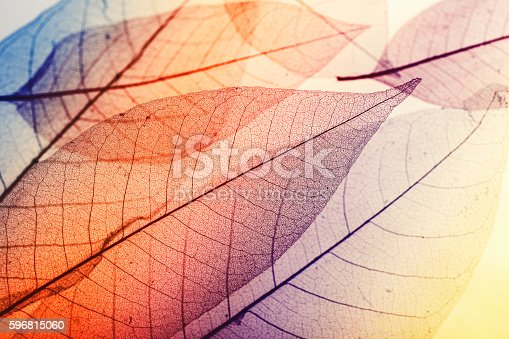 Multicolored macro leaves