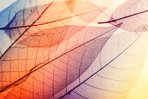 Multicolored macro leaves