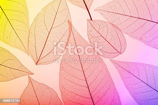 1155045999 istock photo Macro leaves 596815734