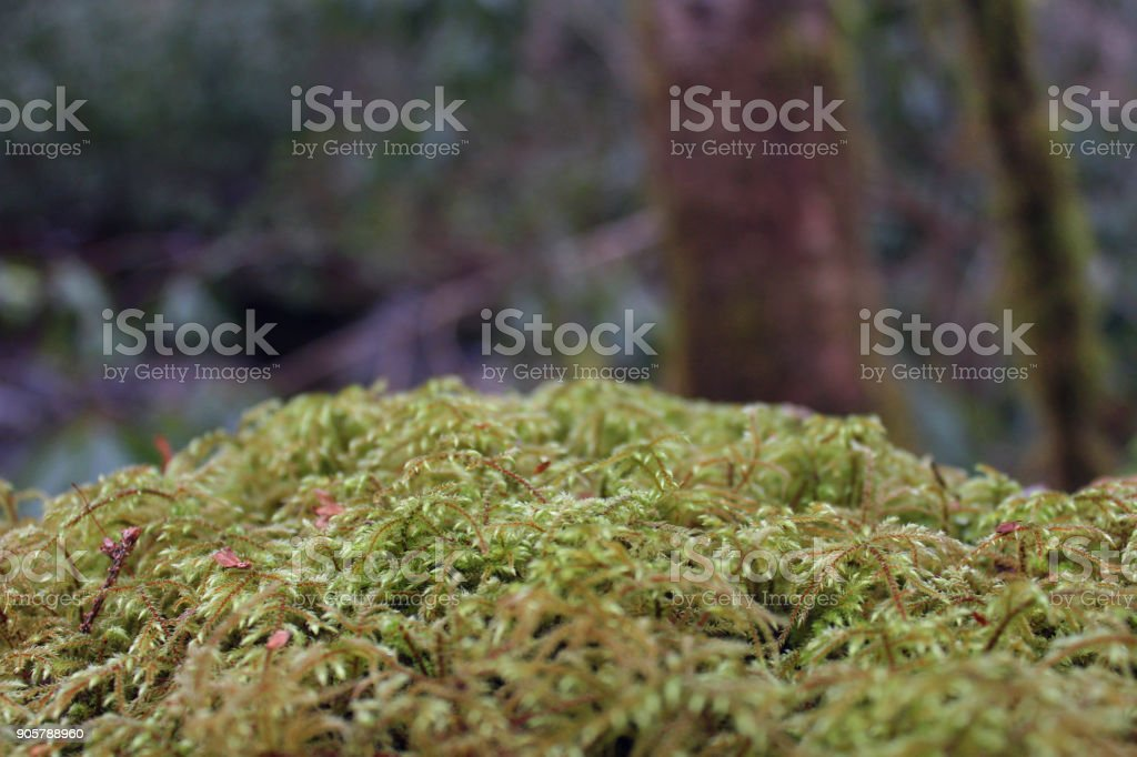 Macro Nature Photography of Moss or Lichen Covering a Stone in the Forest stock photo