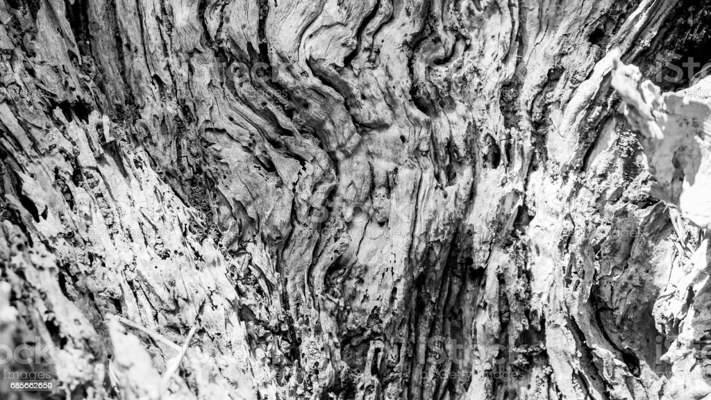 Macro of a bark of olive tree foto de stock royalty-free