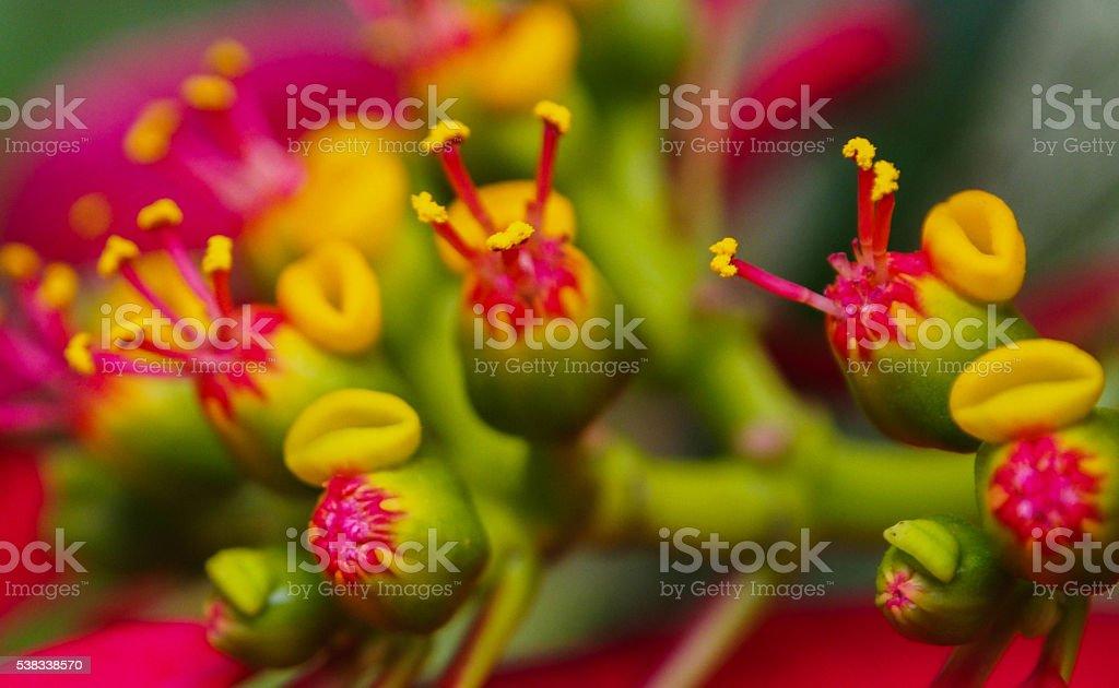 Macro of a Flower stock photo