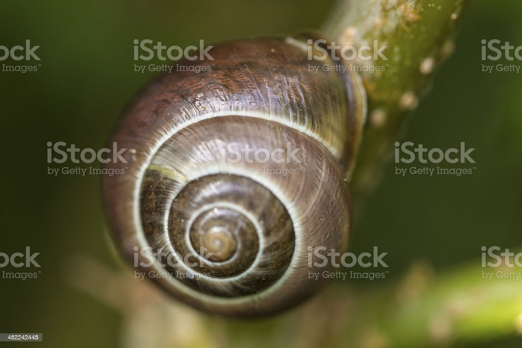 macro of a snail hanging on tree royalty-free stock photo