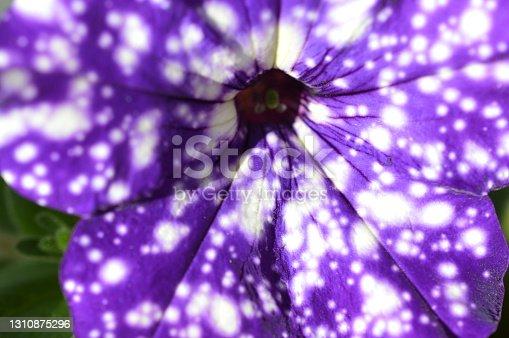 istock Macro of a Summerflower 1310875296