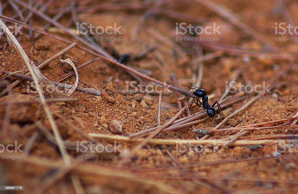 Macro of an ant on the ground stock photo