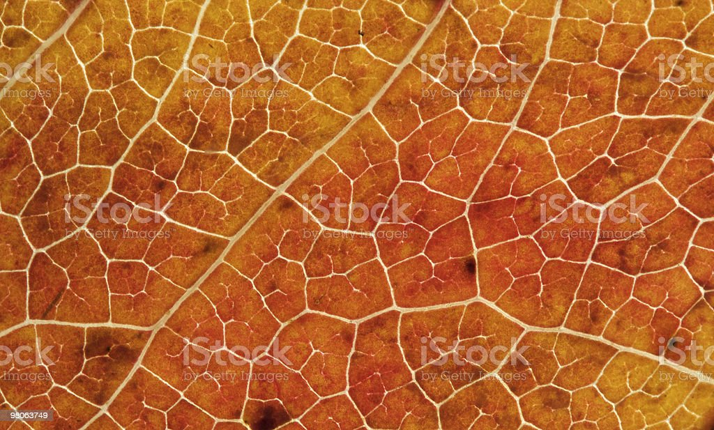 Macro of an Autumn Leaf royalty-free stock photo