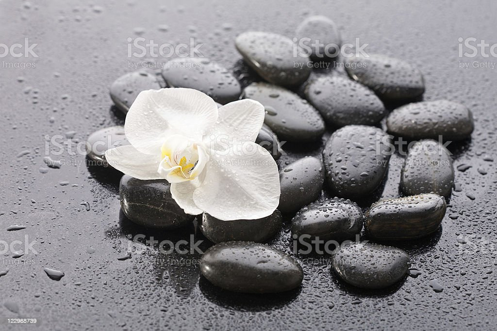 Macro of beautiful orchid on wet pebble royalty-free stock photo