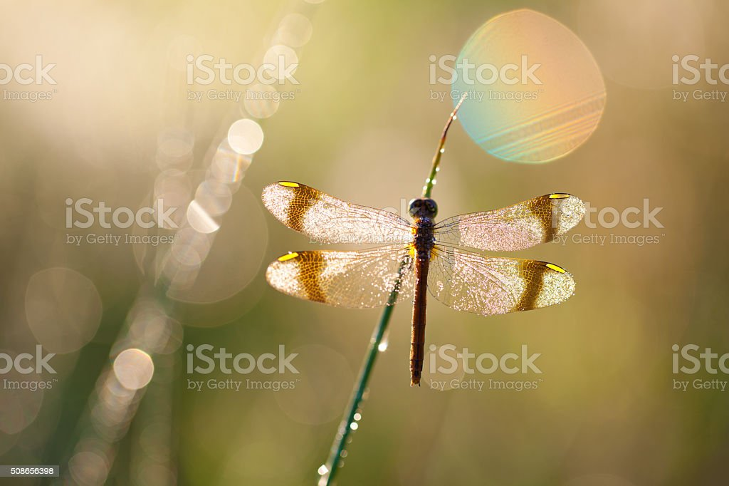 macro of dragon fly with soft focus on a meadow stock photo