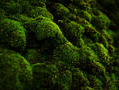 istock macro of green moss 823715580