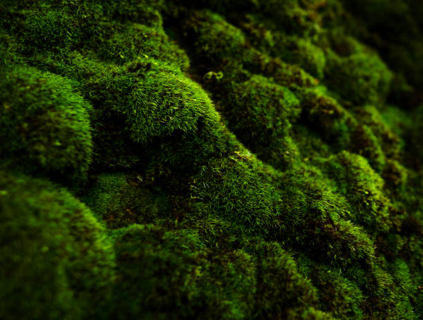 macro of green moss - moss stock pictures, royalty-free photos & images