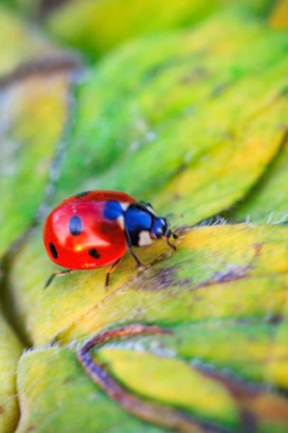 Macro of ladybug on a blade of grass picture id1172429866?b=1&k=6&m=1172429866&s=612x612&w=0&h= xd8lxy5kgjpznujas ggkvarcfcchjhg8mu18xfeeq=