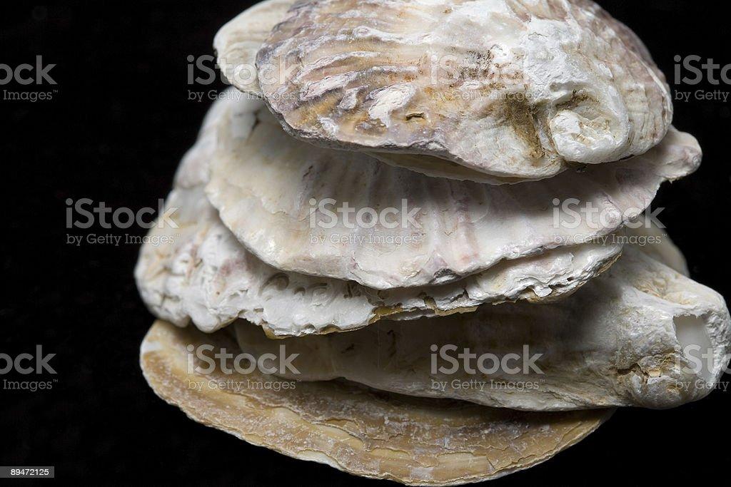 Macro de Seashells foto de stock libre de derechos