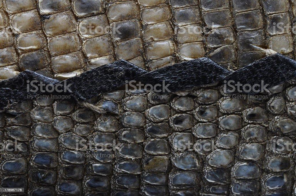 Macro of snake skin royalty-free stock photo
