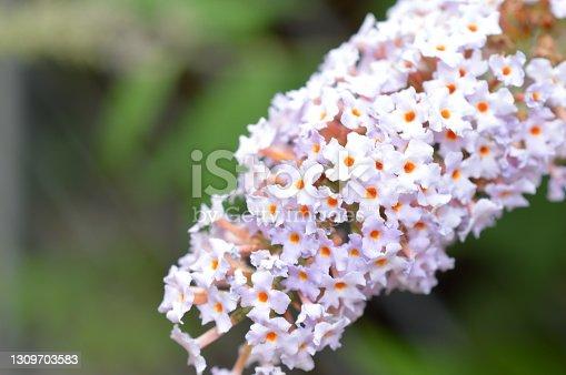 istock Macro of Summerflower 1309703583
