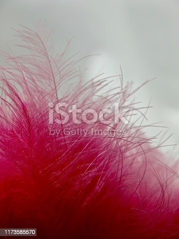 istock Macro of the tips of pink feathers 1173585570