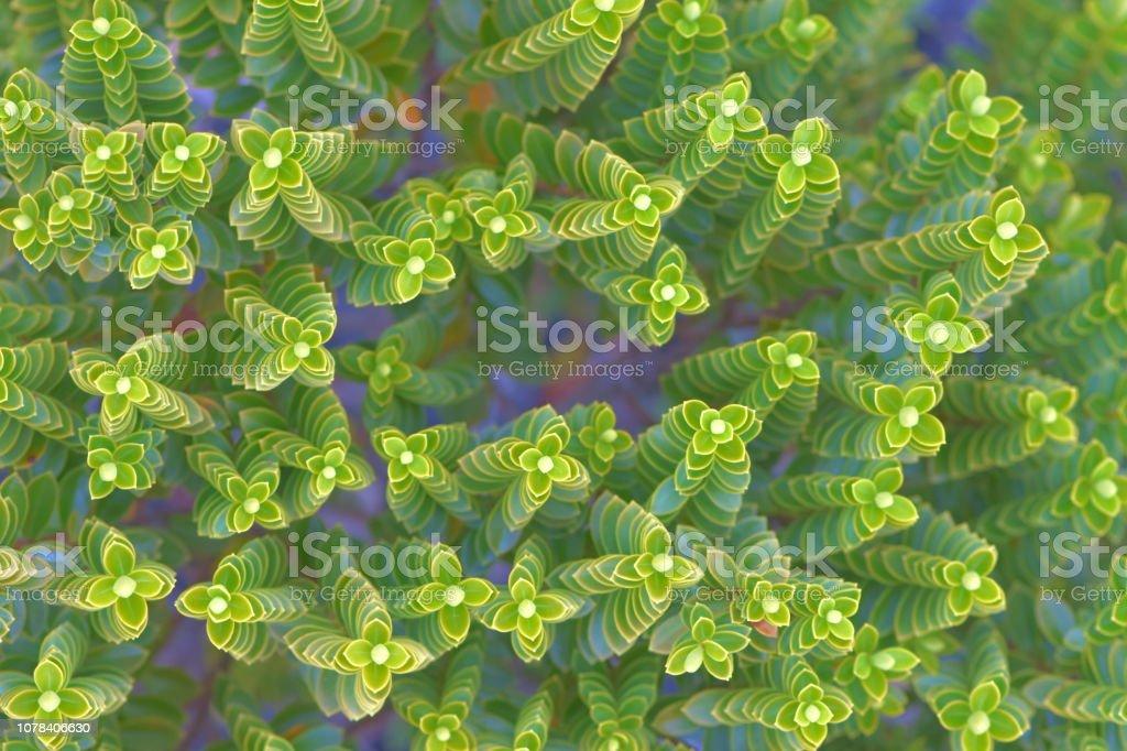 Macro of tiny bush branches stock photo
