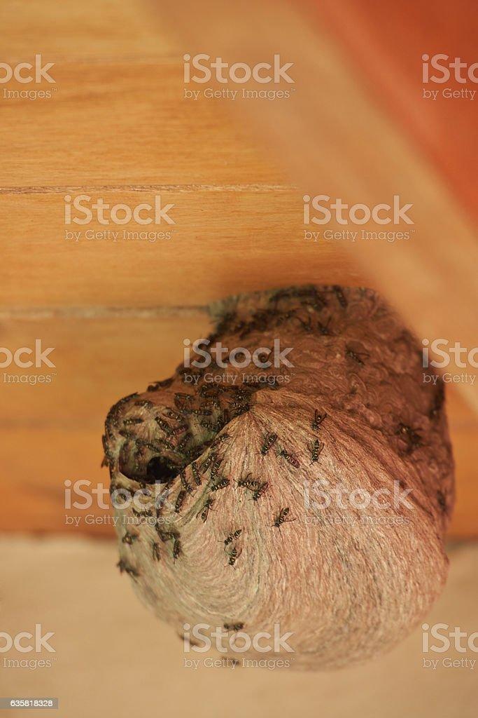 Macro of wasp nest stock photo