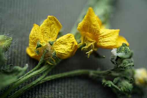 Close up shot of wilting yellow wildflowers growing in Arkansas' rural fields