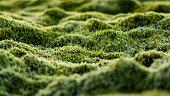 Iceland Mossy Plain Twilight Close-up Detail
